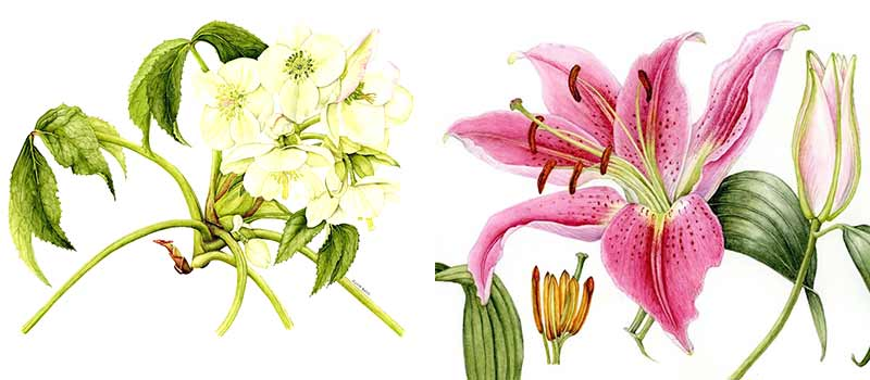 Frome Botanical Artists