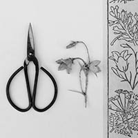 Black and white photograph showing a pair of scissors and a paper flower alongside floral border.