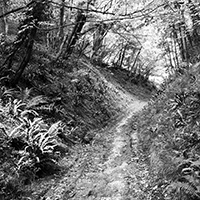 Black and white photograph showing a woodland path.