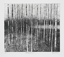 Black and white etching featuring silver birch trees.